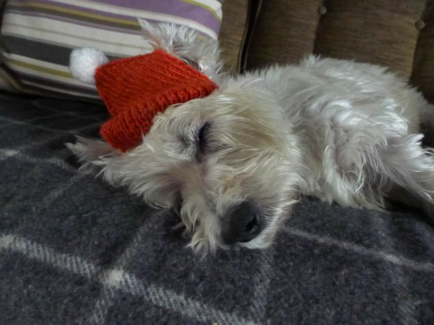 Sleepy Christmas Dog