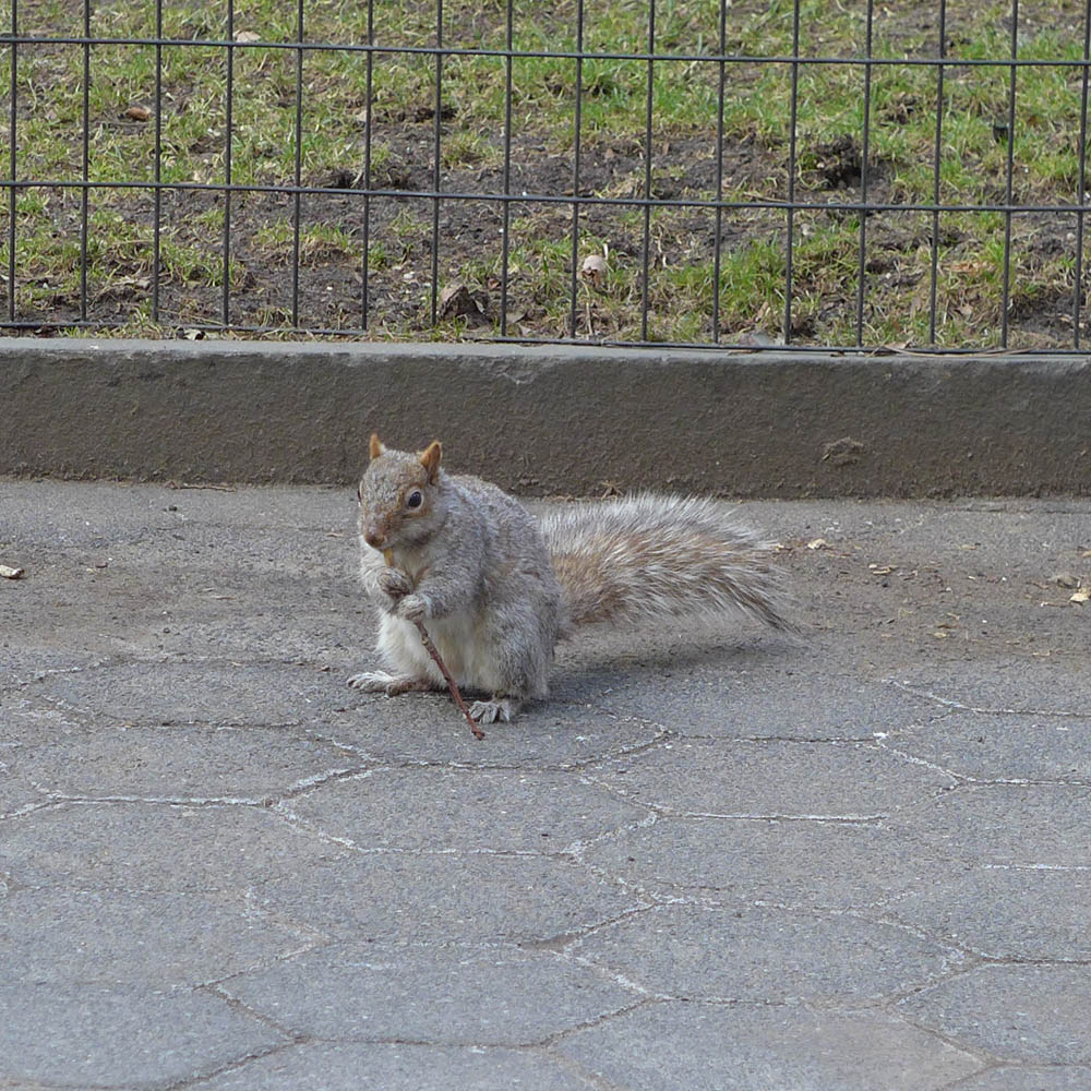 But whatever you do, keep away from the Madison Square Park squirrels (he's plotting)