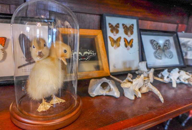 visited the Morbid Anatomy Museum | Today\'s the Day I